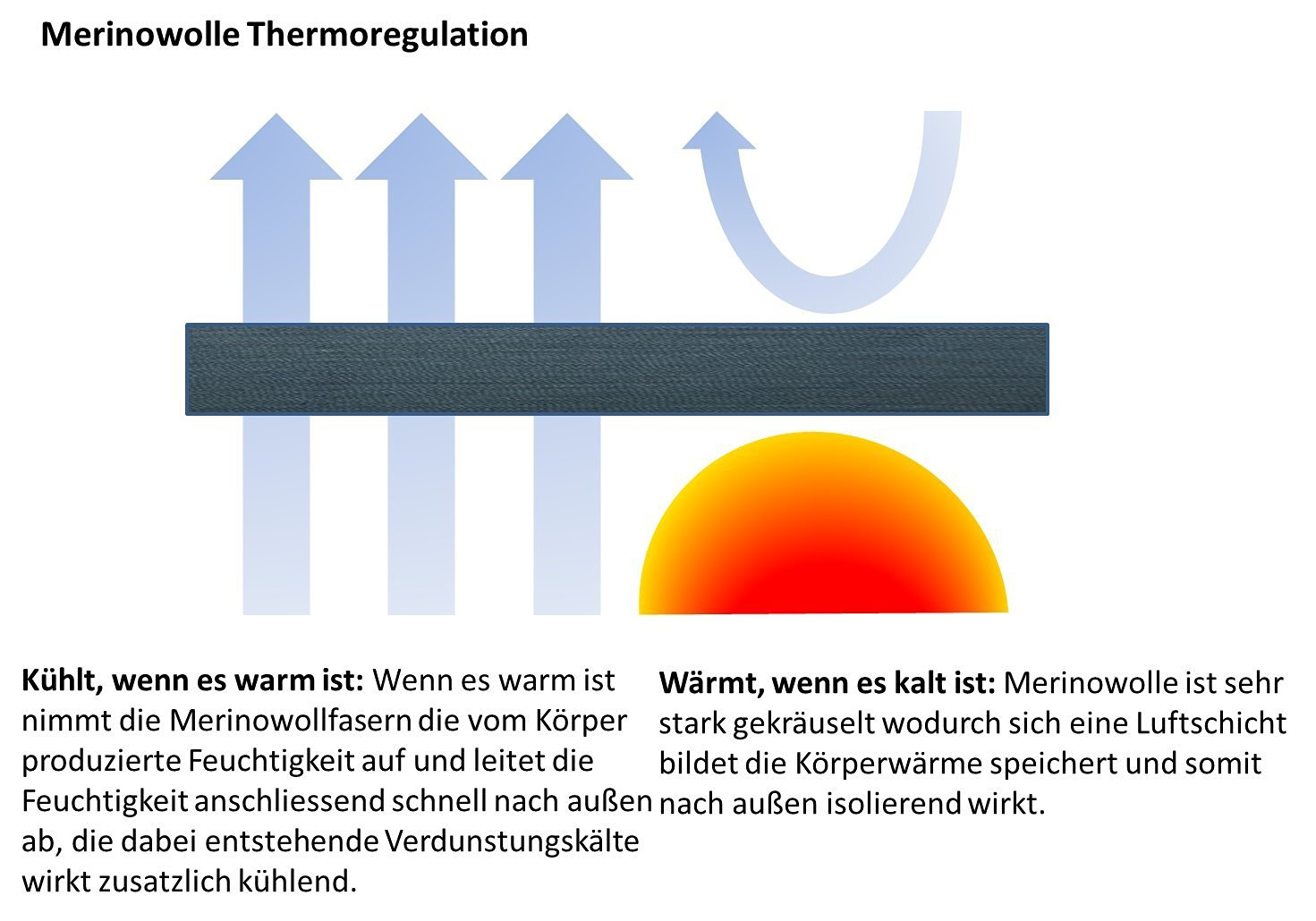 Merino Thermoregulation